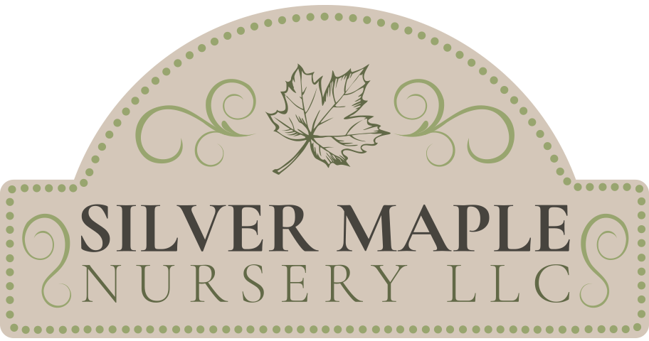Silver Maple Nursery LLC. Logo